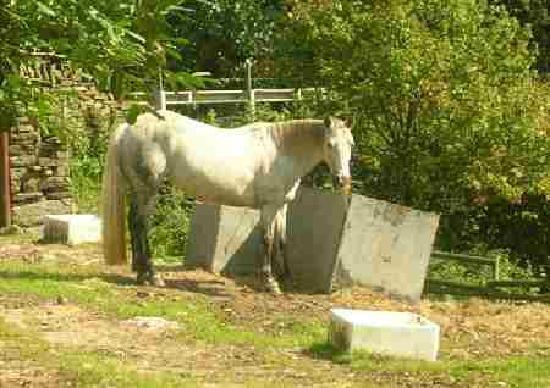 Shaw Farm Static Caravan Park : Lottie the Horse at Shaw Farm