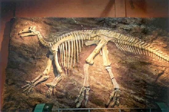 Sandown, UK: Iguanodon fossil skeleton