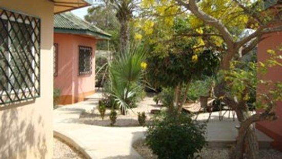Tujereng, Gambia: Laburnum in flower at Farakunku Lodges May