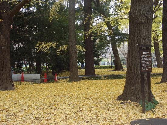 Hibiyakoen, ญี่ปุ่น: まっきいろ