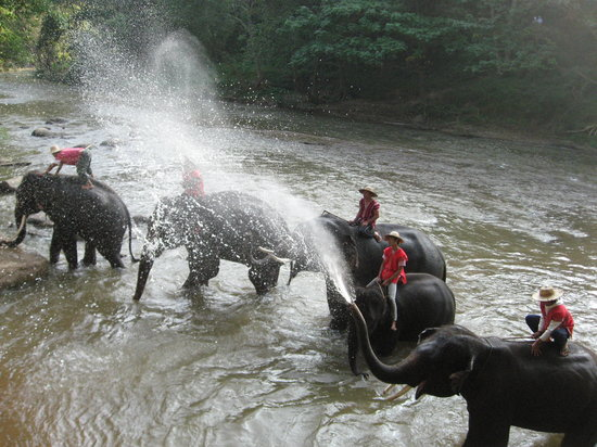 Mae Rim, Thailand: Elephants bathing and we got wet as well!