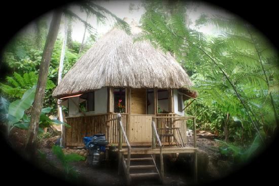 Roots Jungle Retreat: jungle retreat