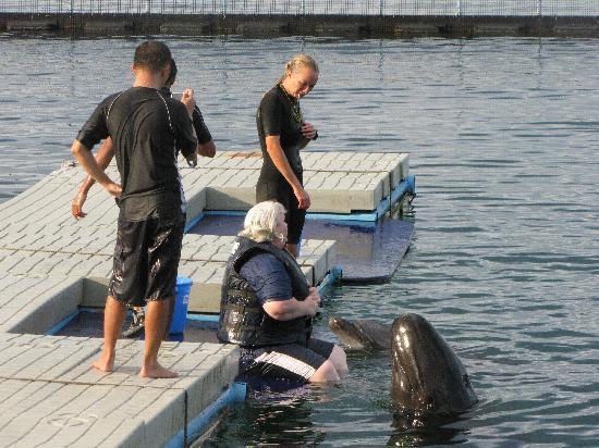 Adventure Beach Waterpark: dolphin show