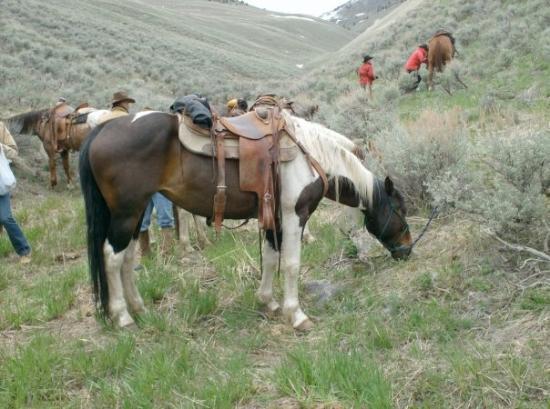 """Dubois, ID: """"Idaho"""" mein Pferd"""