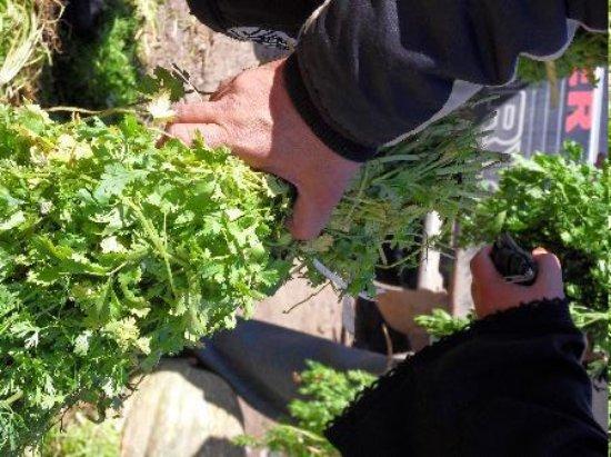 Riad Amazigh Meknes: les plantes pour le thé