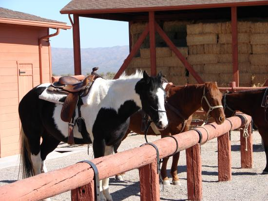 Flying E Ranch: Our trusty steeds