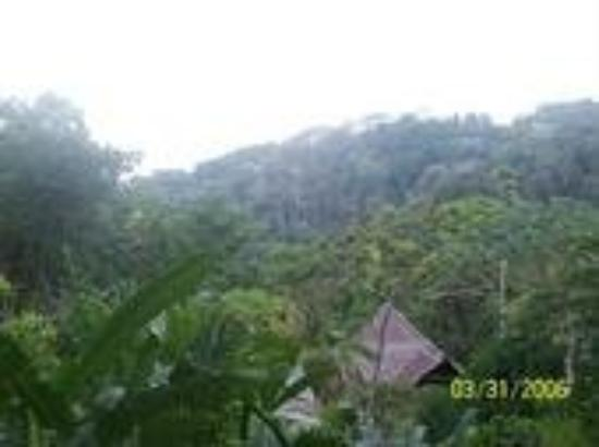 Carate, คอสตาริกา: Luna Lodge, my view every morning!
