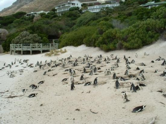 Simon's Town, South Africa: Cape Peninsula