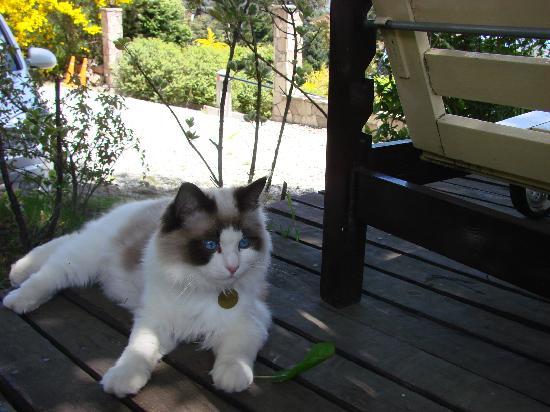 Hosteria Belvedere: Chucho el hermoso gato de Isabel y Exequiel