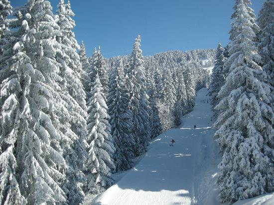 Les Carroz-d'Araches, Γαλλία: great skislopes with beautiful trees