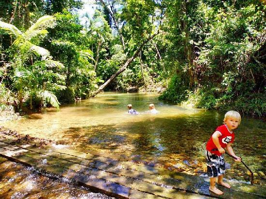 Rainforest Apartments: 10 minutes easy drive to Laceys Creek rainforest swimming area - pristine rainforest creek in Wo