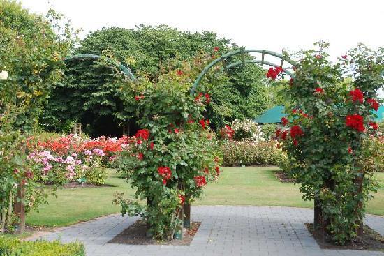 Mona Vale: バラ園