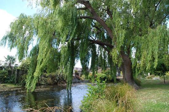 Mona Vale: 池の柳