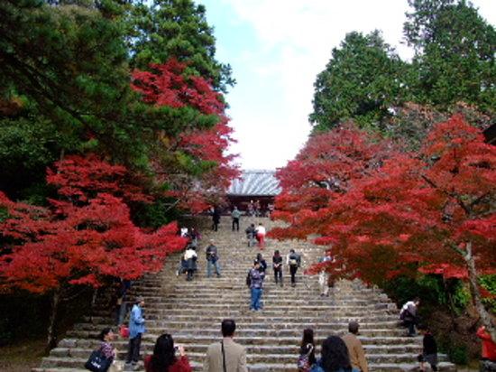 Jingoji Temple : 神護寺1