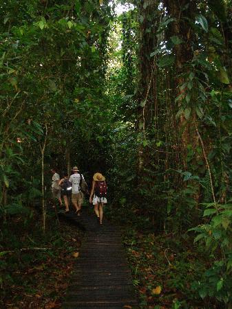 La Loma Jungle Lodge and Chocolate Farm: Walk from Dock to Lodge