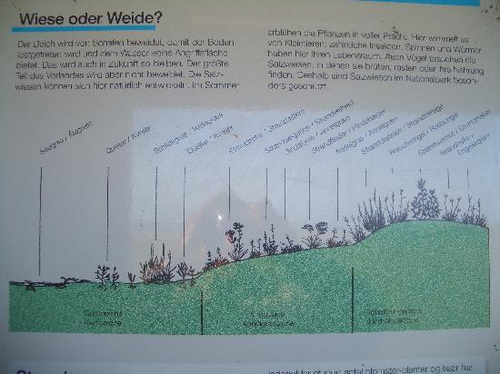Landgasthof Rentoft Krug: Wiese oder Weide
