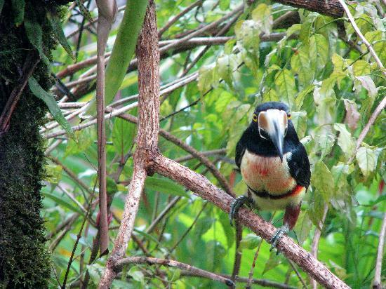 Chalet Nicholas: Birds in the yard