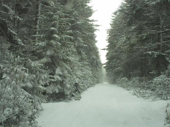 Gaudineer Scenic Area: the drive up!