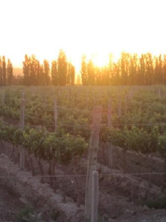 Cavas Wine Lodge: Sunrise in the vineyards