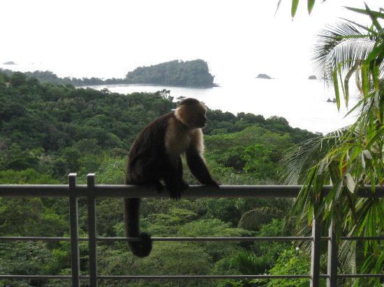Villa Manuel Antonio: monkey on the porch!