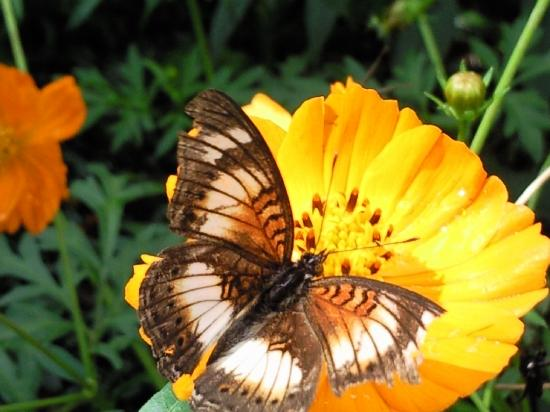 Lagoon Resort: One of the many butterflies in the gardens