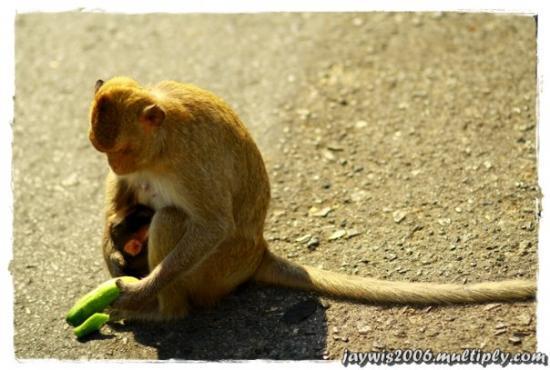 Chonburi, Tailandia: ป้อนลูก
