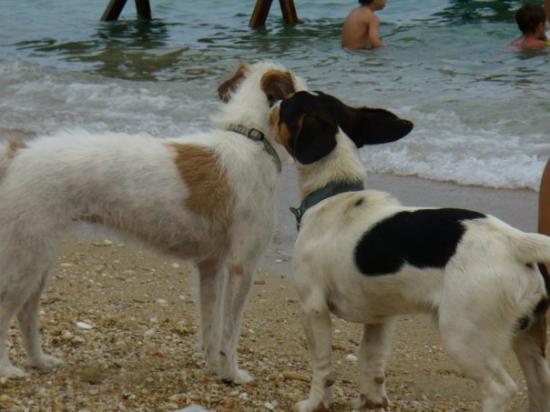 Paou, Grækenland: Γνωριμίες στην παραλία