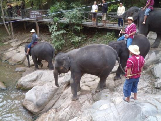 Maesa Elephant Camp: Bath time!