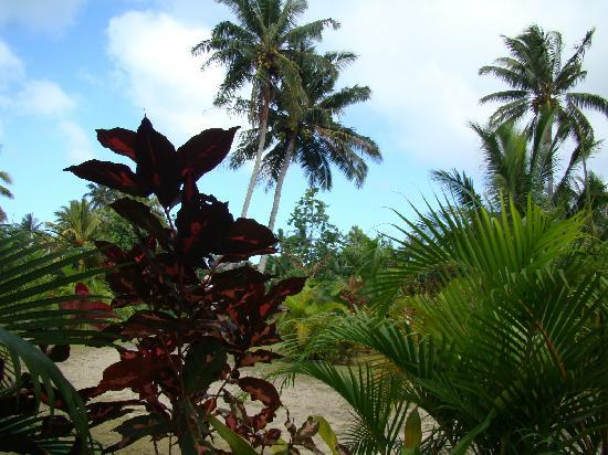 Dorothy's Muri Beach Bungalows: garden at villas