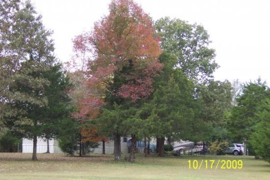 Romance, AR: Fall view