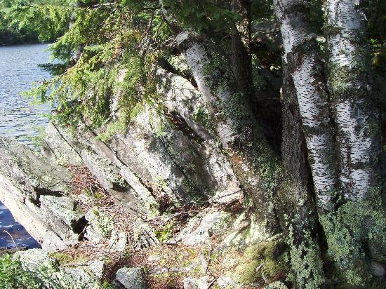 Fenske Lake Resort Cabins : Rocks and trees.