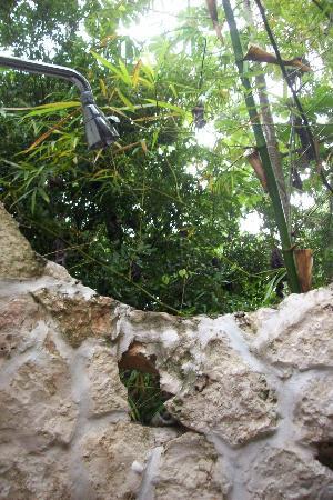 La Selva Mariposa: Jungle Shower