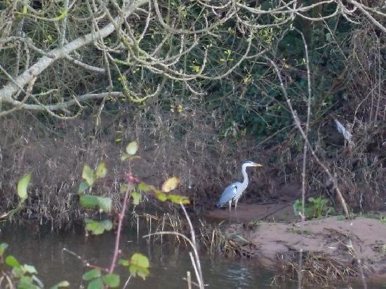 Heath Close: Heron seen on the estuary walk.