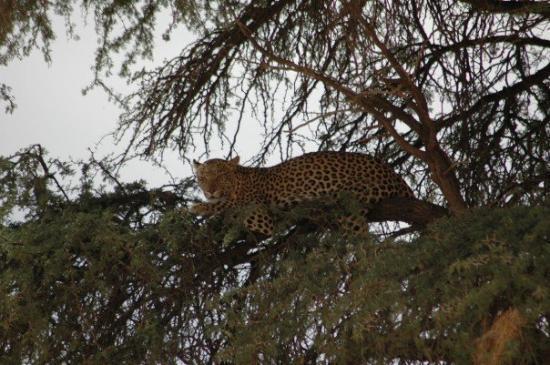 Kgalagadi Transfrontier Park ภาพถ่าย