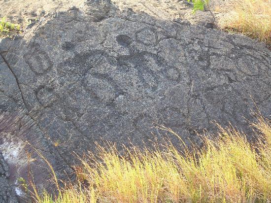 Pu'u Loa Petroglyphs : petroglyphs