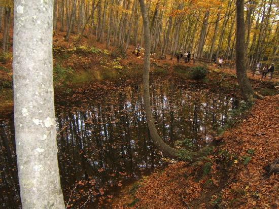 Tokamachi, Japonya: 小さな池ですが存在感抜群でした