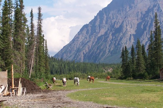Adventure Denali: Horses grazing