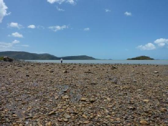 Peninsula Airlie Beach: Shingley Beach