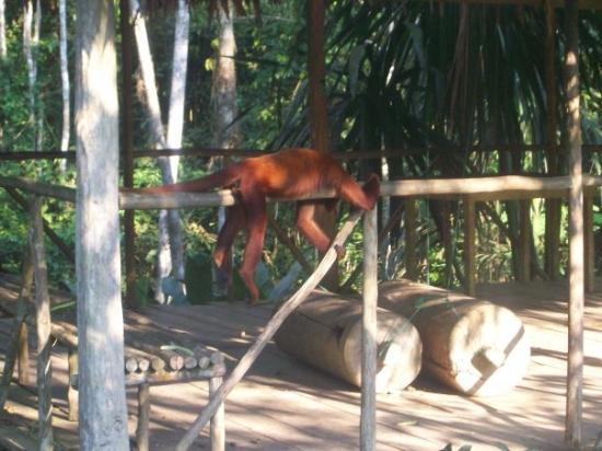 Quistacocha Zoo: Ja! Relajadaso!