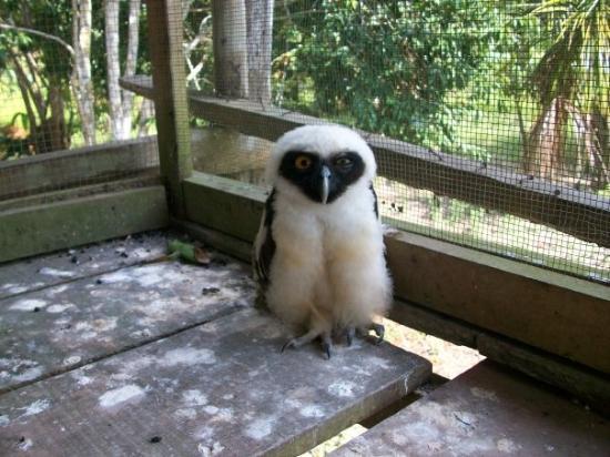 Quistacocha Zoo: Buho Blanco Centro de ayuda para animales, sobre el río Nanay.
