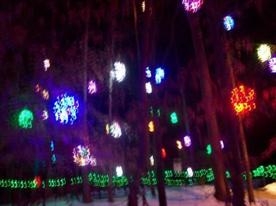Jamestown NC lighted grapevine balls in trees & lighted grapevine balls in trees - Picture of Jamestown North ...