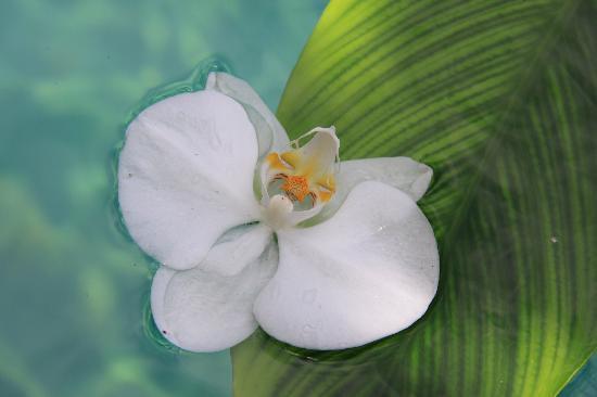 Oazia Spa Villas: beautiful bali flower
