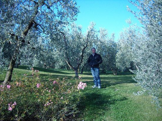 Villa Poggio ai Merli: Ulivi