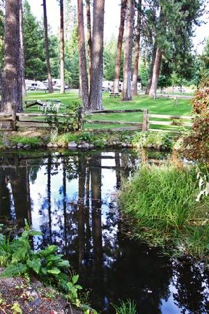 McCloud Dance Country RV Resort : Trout Pond