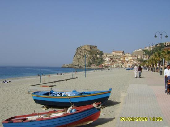 Scilla Photo