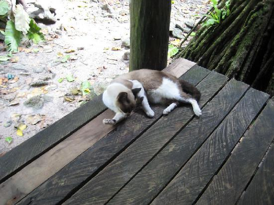 Kosrae Village Ecolodge & Dive Resort: one of their house cats
