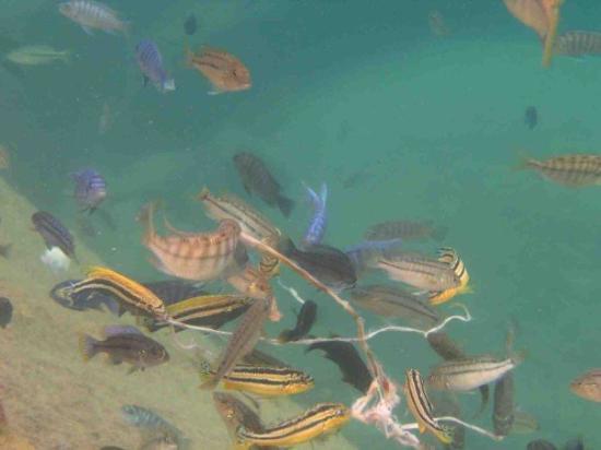Cape Maclear ภาพถ่าย