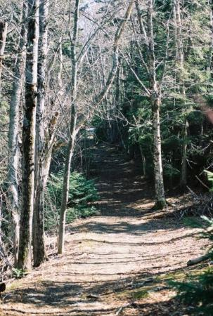 Eastport, ME: One of the trails at Shackford Head.
