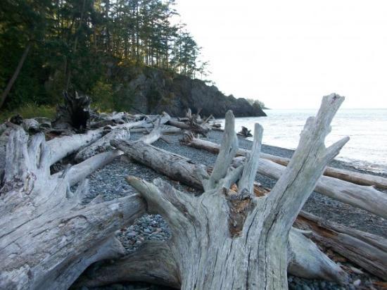 Whidbey Island, Etat de Washington : Driftwood on the beach in Washington.