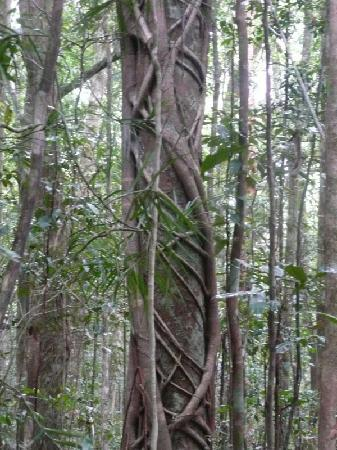 Paluma, Australia: rainforest